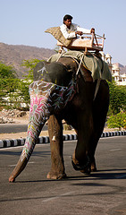Rider and Elephant