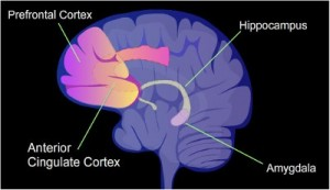 prefrontal-cortex-addiction-PUBLIC