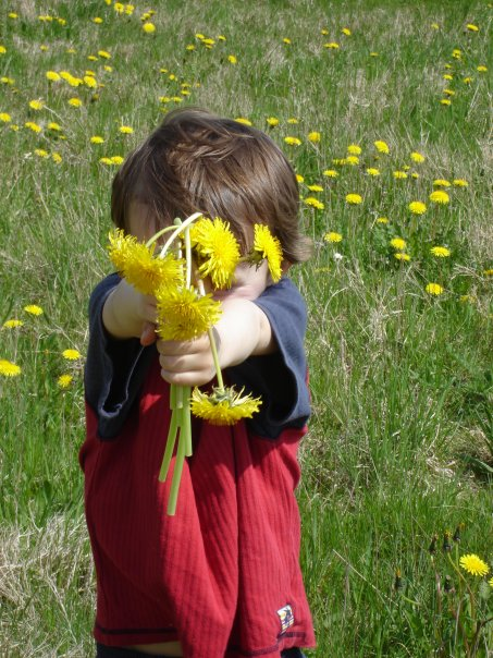 Hugo with dandelions