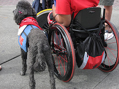 Wheelchair and companion dog