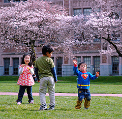 Children and cherry trees