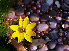Flower and Pebbles