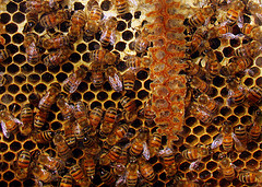 Teamwork in the hive